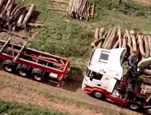 Nene Valley Firewood – how we prepare our logs for you